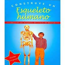 CONSTRUYE UN ESQUELETO HUMANO (CON MAQUETA)